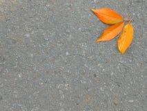 沥青和三片橙色叶子 免版税图库摄影