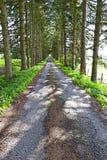 沥青森林公路在比利时 免版税库存图片