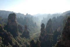 沥青的森林reserve10 免版税库存照片