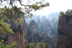 沥青的森林reserve3 免版税库存图片
