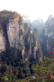 沥青的森林reserve9 免版税库存照片
