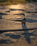 沥青背景路石头适当的阳光纹理 免版税图库摄影