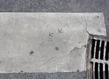沥青被绘的鸟脚步 库存照片