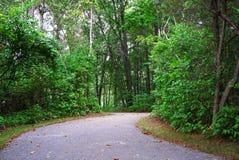沥青路线在公园摇摆在树之间 免版税库存图片