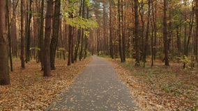 沥青路线在秋天落叶林里 股票录像