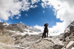 沮丧摆在奥地利阿尔卑斯的艾米 免版税库存照片