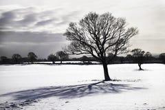 沮丧的结构树 免版税库存图片
