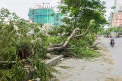 河内,越南- 2015年6月14日:下落的树在街道上损坏了由在Tam Trinh街道的自然重的风暴 免版税库存图片