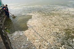河内,越南- 2016年10月2日:在湖的许多死的鱼有垃圾收集工的,环境工作者采取许多死的鱼从我们 库存图片