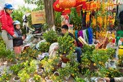 河内,越南- 2016年2月7日:在街道上的人销售和购买装饰圆金柑树 与桃子花一起,金桔tre 库存图片