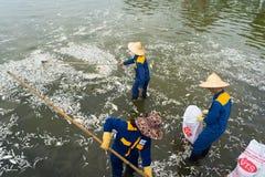 河内,越南- 2016年10月2日:垃圾收集工,环境工作者采取许多死的鱼从西湖 免版税图库摄影