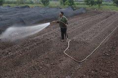 河内,越南- 2015年10月21日:农夫水他的领域的植物在白天 免版税库存图片