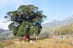 河南,中国- 2015年11月03日:Songyue修道院废墟 著名喂 免版税图库摄影