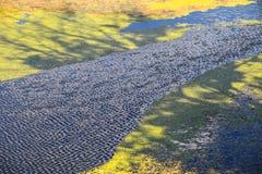 河博苏特河在温科夫齐 库存图片