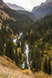 河去在森林中的Arashan 免版税图库摄影