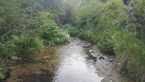 河可看见和隐蔽 图库摄影