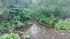 河可看见和隐蔽 免版税图库摄影