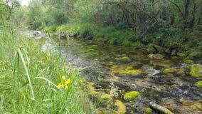 河可看见和隐蔽 库存照片