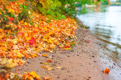 河和下落的叶子的银行 免版税库存照片