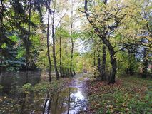 河和五颜六色的秋天树 图库摄影