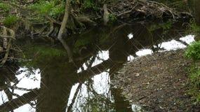 河和小河水仍然跑深深14 库存照片