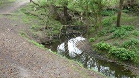 河和小河水仍然跑深深11 图库摄影