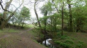 河和小河水仍然跑深深10 库存照片