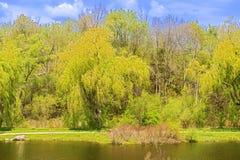 河和树在公园基奇纳,安大略 免版税库存照片