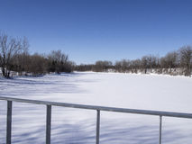 冻河和树在冬天在公园 免版税库存照片