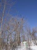 冻河和树在冬天在公园 免版税库存图片