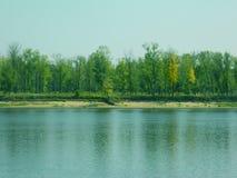 河和森林 库存照片