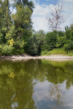 河和森林 库存图片