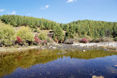 河和森林Chhume谷的,不丹 免版税库存照片