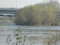 河和植被的看法 库存照片