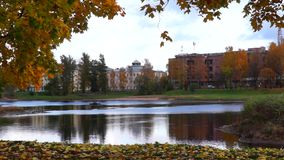 河和槭树在秋天城市 股票视频