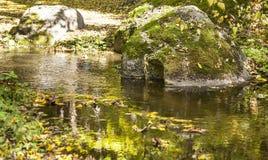 河和石头在秋天森林里 图库摄影