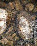河和石头 免版税库存图片