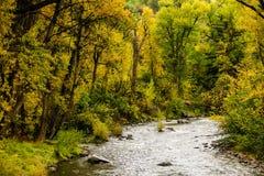 河和秋天树 库存照片