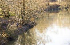 河和秋天树 免版税库存照片