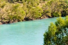 河和结构树 库存照片
