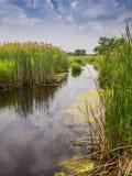 河和芦苇 图库摄影