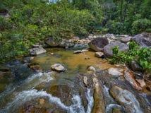 河和雨林 免版税库存图片