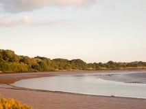 河国家与趟水者鸟浪潮和泥的场面风景 图库摄影