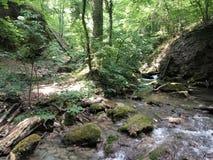河在一个密集的森林里 免版税图库摄影