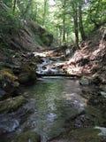 河在一个密集的森林里 免版税库存图片
