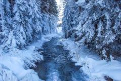 河在冬天 免版税图库摄影