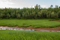 河在北方针叶林烘干  库存照片