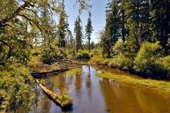 河在原野 免版税库存照片