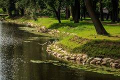 河在夏天公园 免版税库存图片