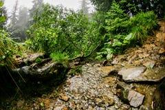 河在夏天森林里 图库摄影